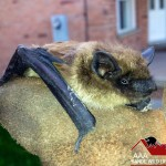 Bat Removal Specialists