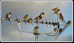 ani_sparrow