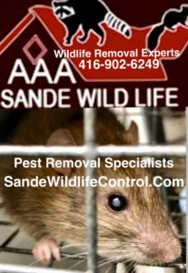 pest removal specialists