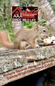 Squirrel Removal Specialist