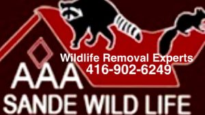 Raccoon Removal Specialists